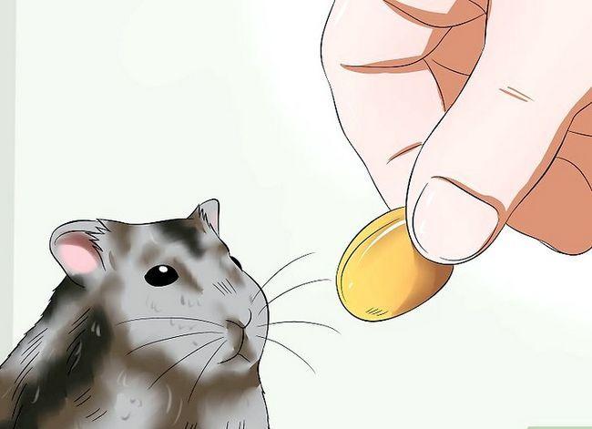 Prent getiteld Trein `n hamster om nie Stap 7 te byt nie
