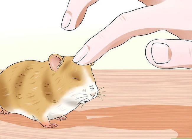 Prent getiteld Trein `n hamster om nie Stap 8 te byt nie