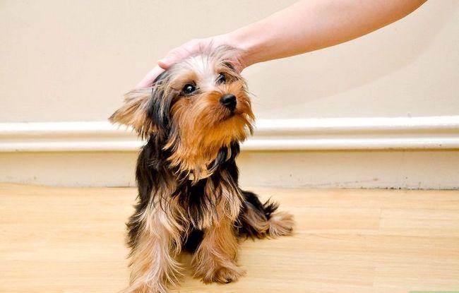 Beeld getiteld Bond With a New Puppy Stap 3