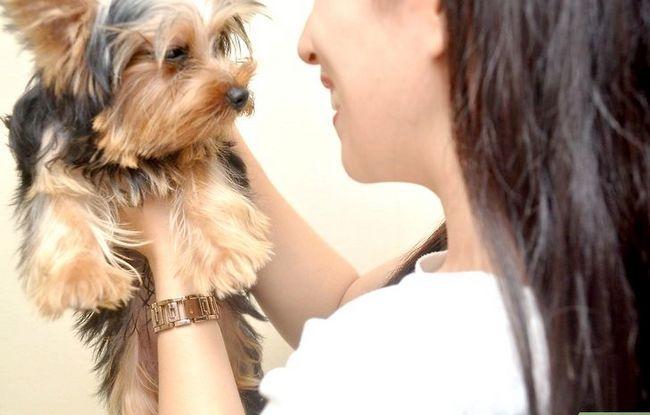 Beeld getiteld Bond With a New Puppy Stap 4