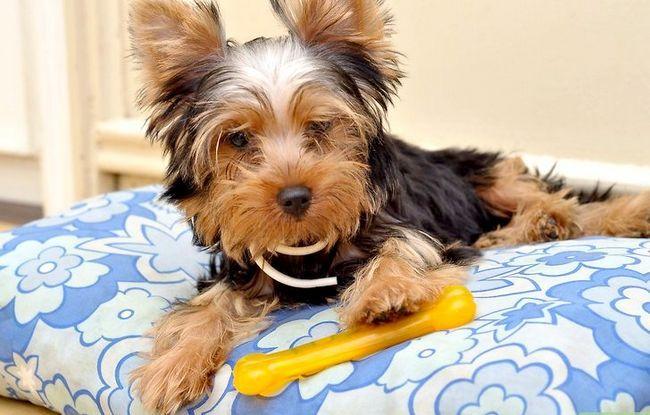 Beeld getiteld Bond With a New Puppy Stap 6