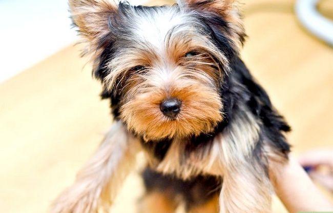 Beeld getiteld Bond With a New Puppy Stap 7