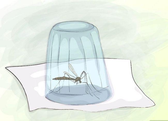 Prent getiteld Vermy Mosquito Bites Stap 5