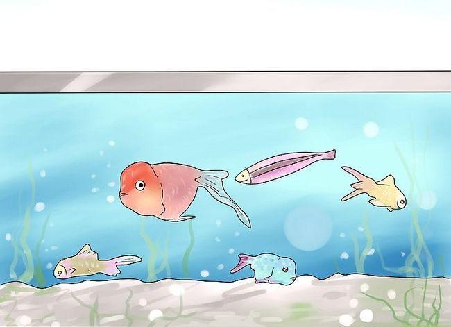 Beeld getiteld Hou `n vis van sterf terwyl jy op vakansie is Stap 6