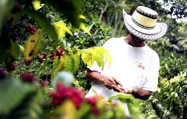 Prent getiteld NP Coffee Farmer3