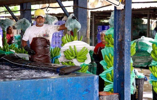 Beeld getiteld Banana Plantation Worker
