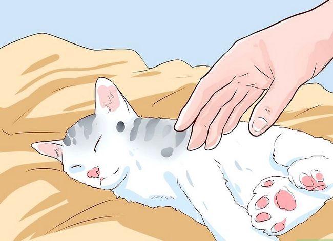 Prent getiteld Sit `n Hyper Kitten in Stap 4
