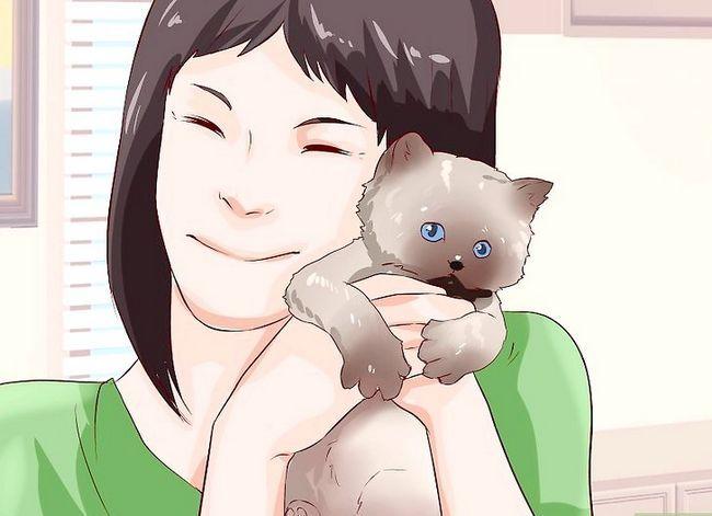 Prent getiteld Sit `n Hyper Kitten in Stap 6