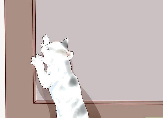 Prent getiteld Sit `n Hyper Kitten in Stap 10