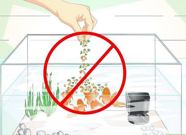 Prent getiteld Hou Aquarium Water Clear Stap 12