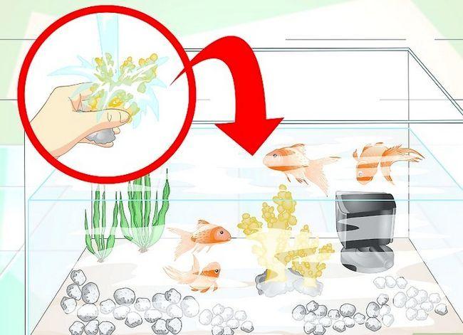 Prent getiteld Hou Aquarium Water Clear Stap 13