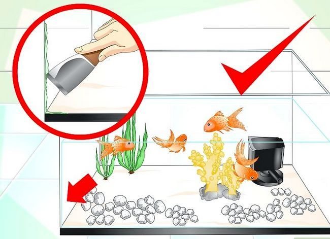 Prent getiteld Hou Aquarium Water Clear Stap 14