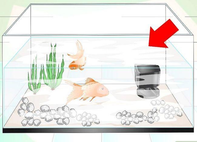 Prent getiteld Hou Aquarium Water Clear Stap 9