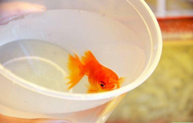 Prent getiteld Maak `n Goldfish Live vir dekades Stap 3
