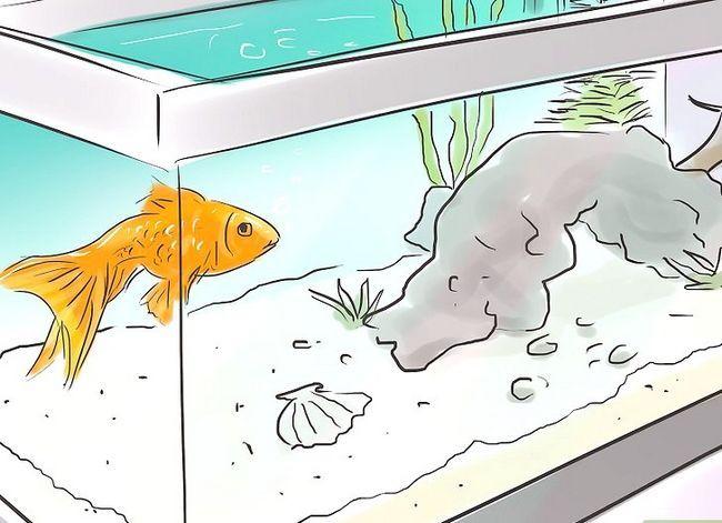 Prent getiteld Maak `n 5 Gallon Aquarium Interessante Stap 9