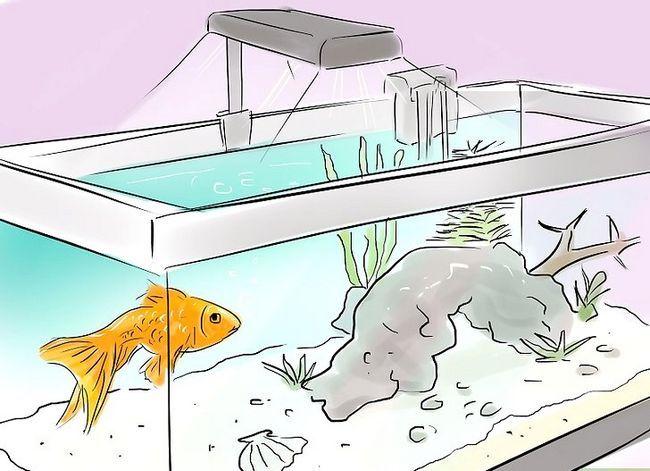 Prent getiteld Maak `n 5 Gallon Aquarium Interessante Stap 10