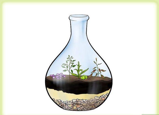 Beeld getiteld Groei `n tuin in `n bottel Stap 5