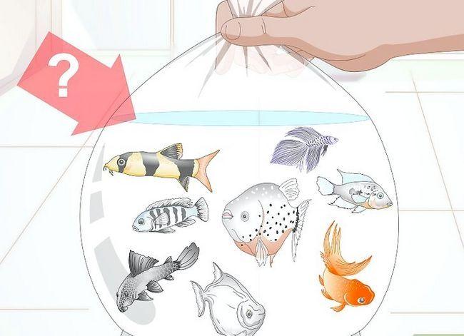 Beeld getiteld Koop `n nuwe akwarium Stap 1