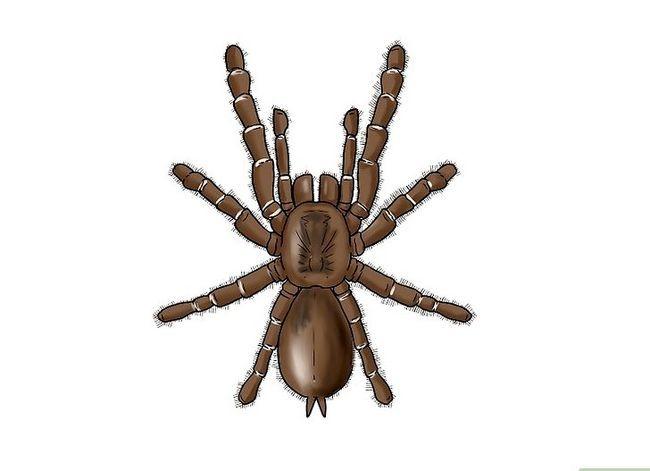 Prent getiteld Identifiseer `n bobbejaan Spider Stap 1