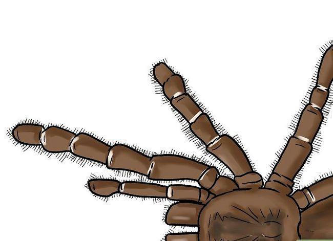 Prent getiteld Identifiseer `n Baboon Spider Stap 3