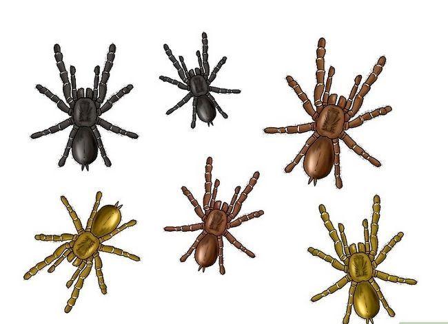 Prent getiteld Identifiseer `n bobbejaan Spider Stap 4