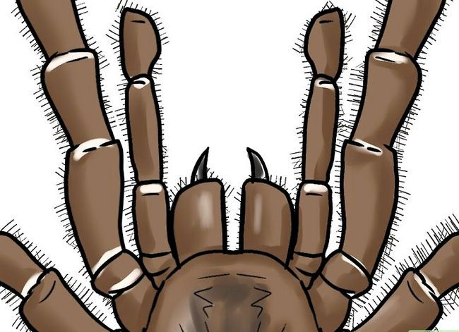 Prent getiteld Identifiseer `n bobbejaan Spider Stap 5