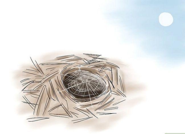 Prent getiteld Identifiseer `n bobbejaan Spider Stap 6