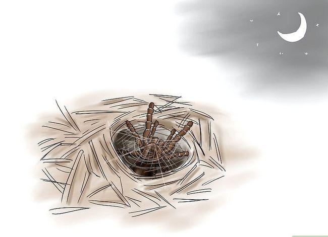 Prent getiteld Identifiseer `n Babel Spider Stap 7