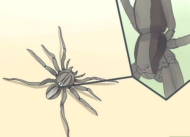Prent getiteld Identifiseer `n Water Spider Stap 4