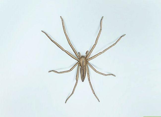 Prent getiteld Identifiseer `n Kwekery Web Spider Stap 4