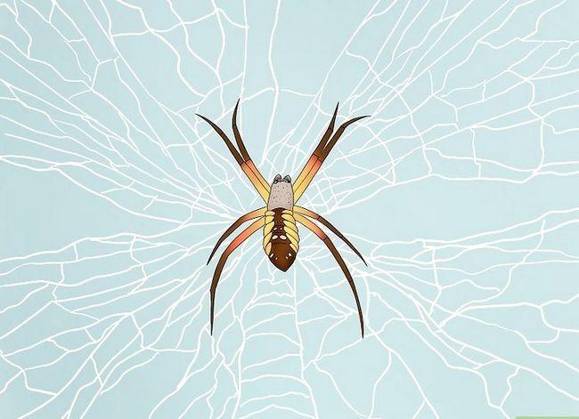Prent getiteld Identifiseer `n Nursery Web Spider Stap 8