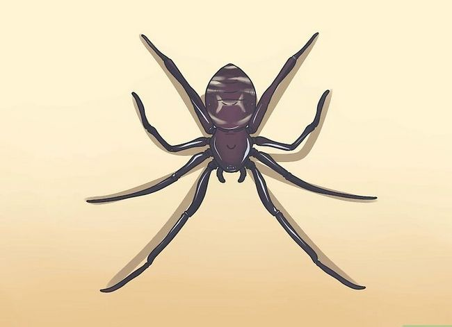 Prent getiteld Identifiseer `n Spinnerweb Spider Stap 1