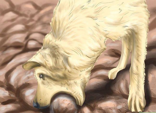 Beeld getiteld Spot Rabies in `n Dog Stap 3
