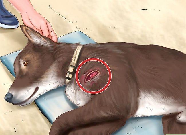 Beeld getiteld Spot Rabies in `n Dog Stap 4