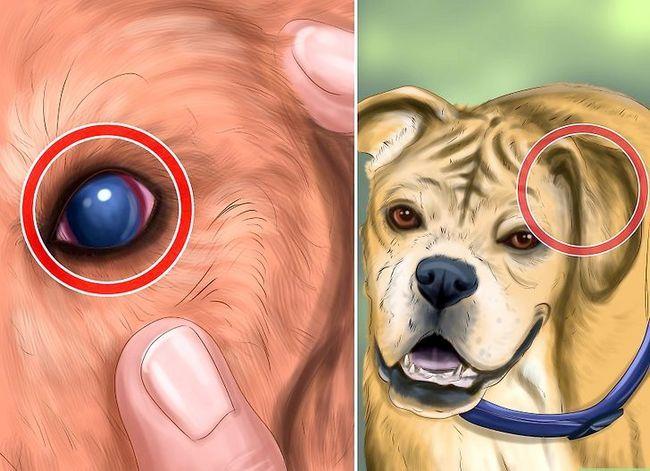 Beeld getiteld Spot Rabies in `n Dog Stap 7