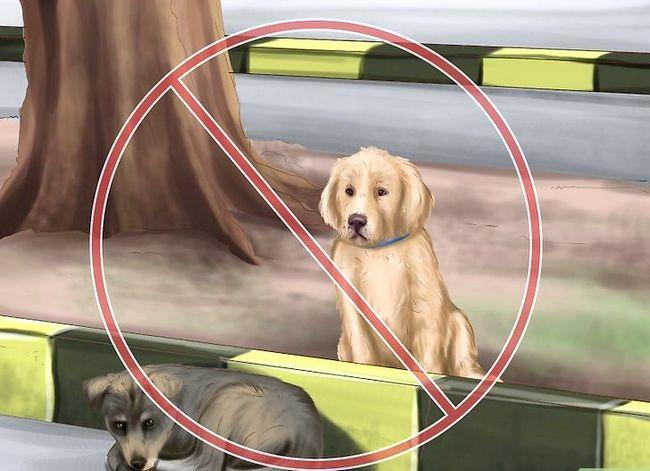 Beeld getiteld Spot Rabies in `n Dog Stap 9