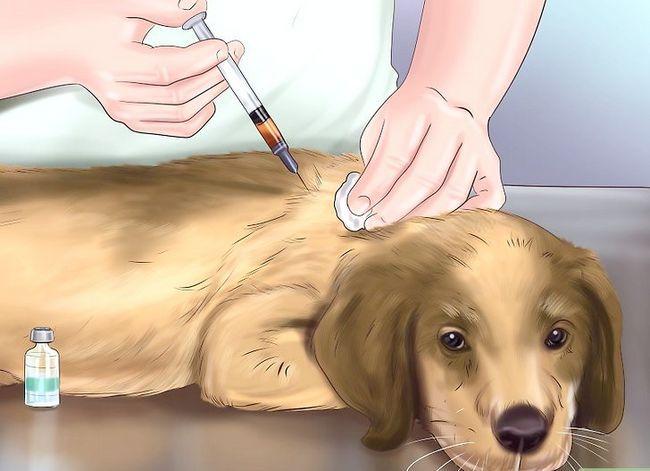 Beeld getiteld Spot Rabies in `n Dog Stap 10