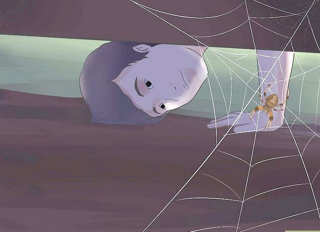 Prent getiteld Identifiseer `n Skuur Spider Stap 5