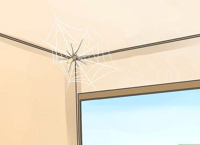 Prent getiteld Identifiseer `n Geel Sakkie Spider Stap 4