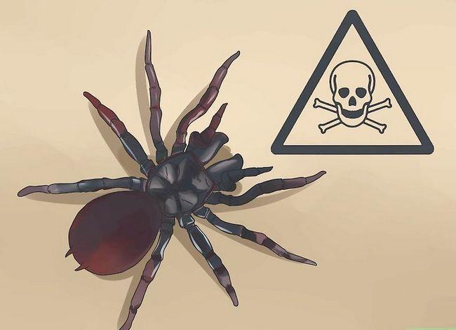 Prent getiteld Identifiseer `n Trechter Spider Stap 1