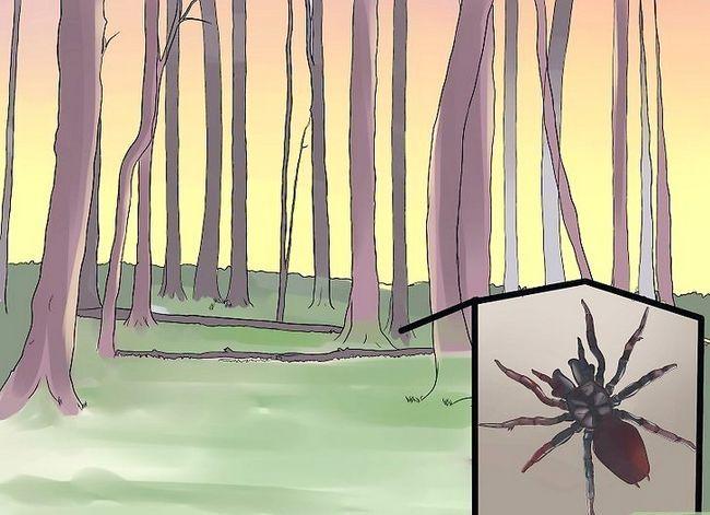 Prent getiteld Identifiseer `n Trechter Spider Stap 5