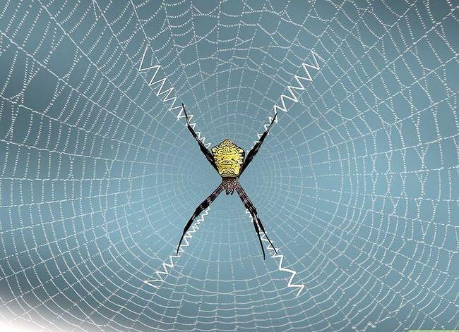 Prent getiteld Identifiseer `n Banana Spider Stap 14