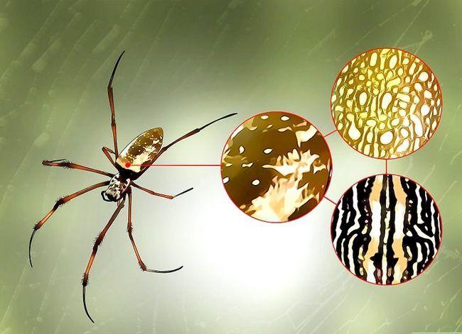 Prent getiteld Identifiseer `n Banana Spider Stap 3