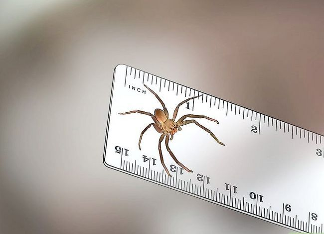Prent getiteld Identifiseer `n Banana Spider Stap 7