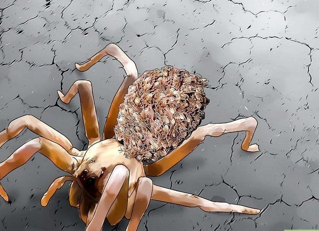 Prent getiteld Identifiseer `n Wolf Spider Stap 9