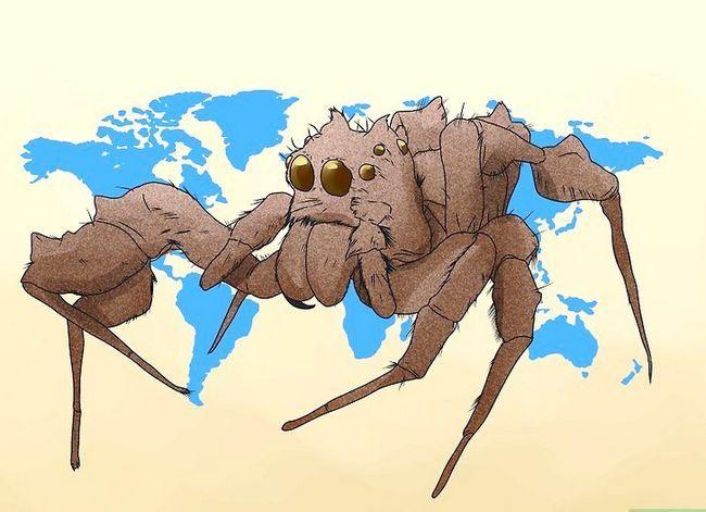 Prent getiteld Identifiseer `n Portia Spider Stap 1