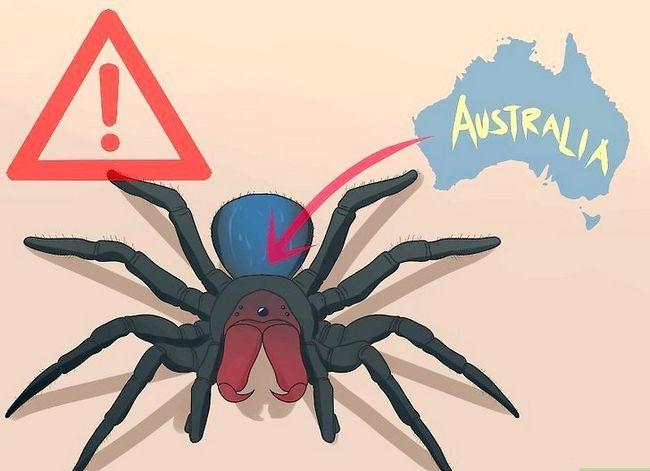 Prent getiteld Identifiseer `n muis Spider Stap 1