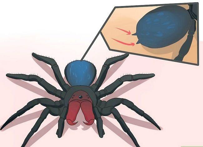 Prent getiteld Identifiseer `n muis Spider Stap 3