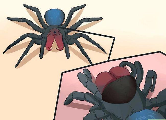 Prent getiteld Identifiseer `n muis Spider Stap 4