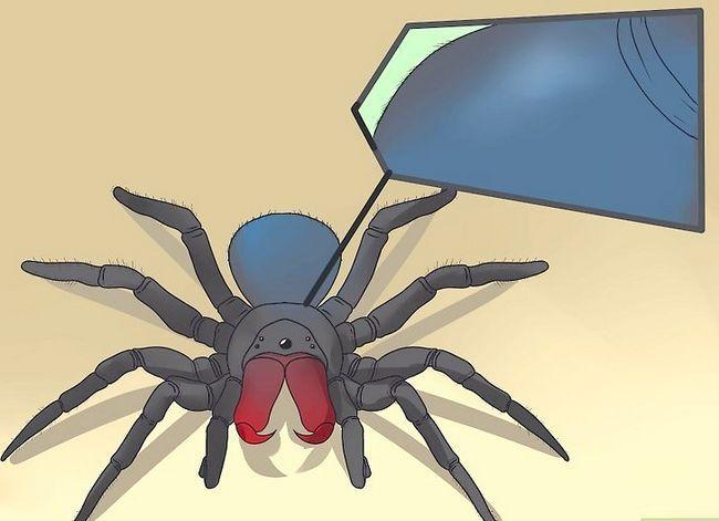 Prent getiteld Identifiseer `n muis Spider Stap 6